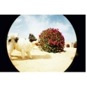 Lomo Fisheye One - Zwart