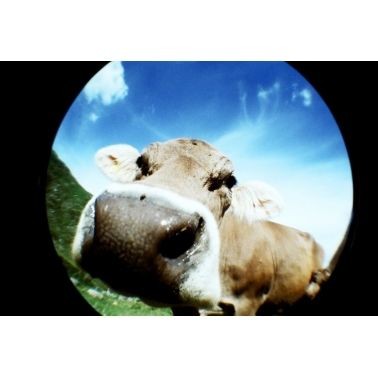 Lomo Fisheye No. 2 - Zwart